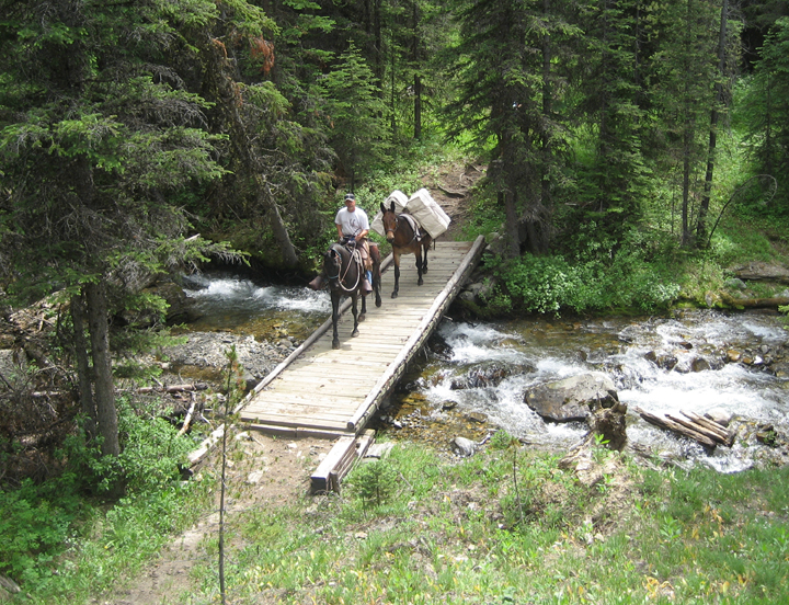 A trail crew on horseback hauls in supplies, crossing a small creek on a little bridge in the Anaconda Pintler Wilderness.